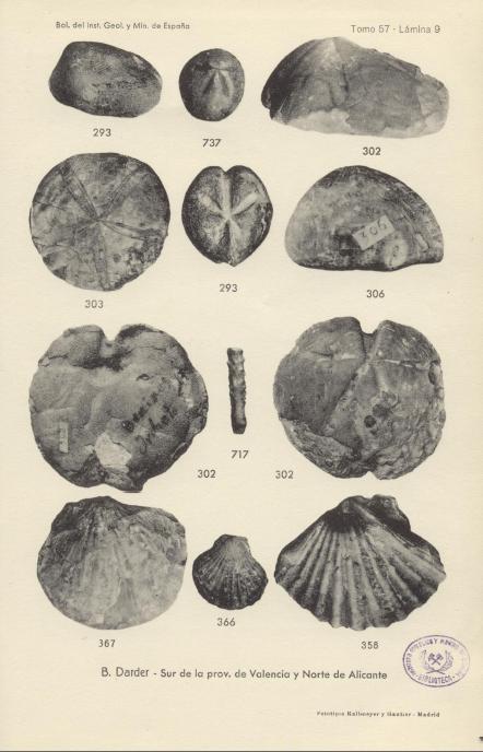 Alguns fòssils recollits per Mora i els seus alumnes de Sella. 373: Prenaster alpinus (voltants de Zacarés): 306: Echinolampas  lucentinus (voltants de Sella); 717: Chytocidaris avenionensis (barranc de l'Arc).